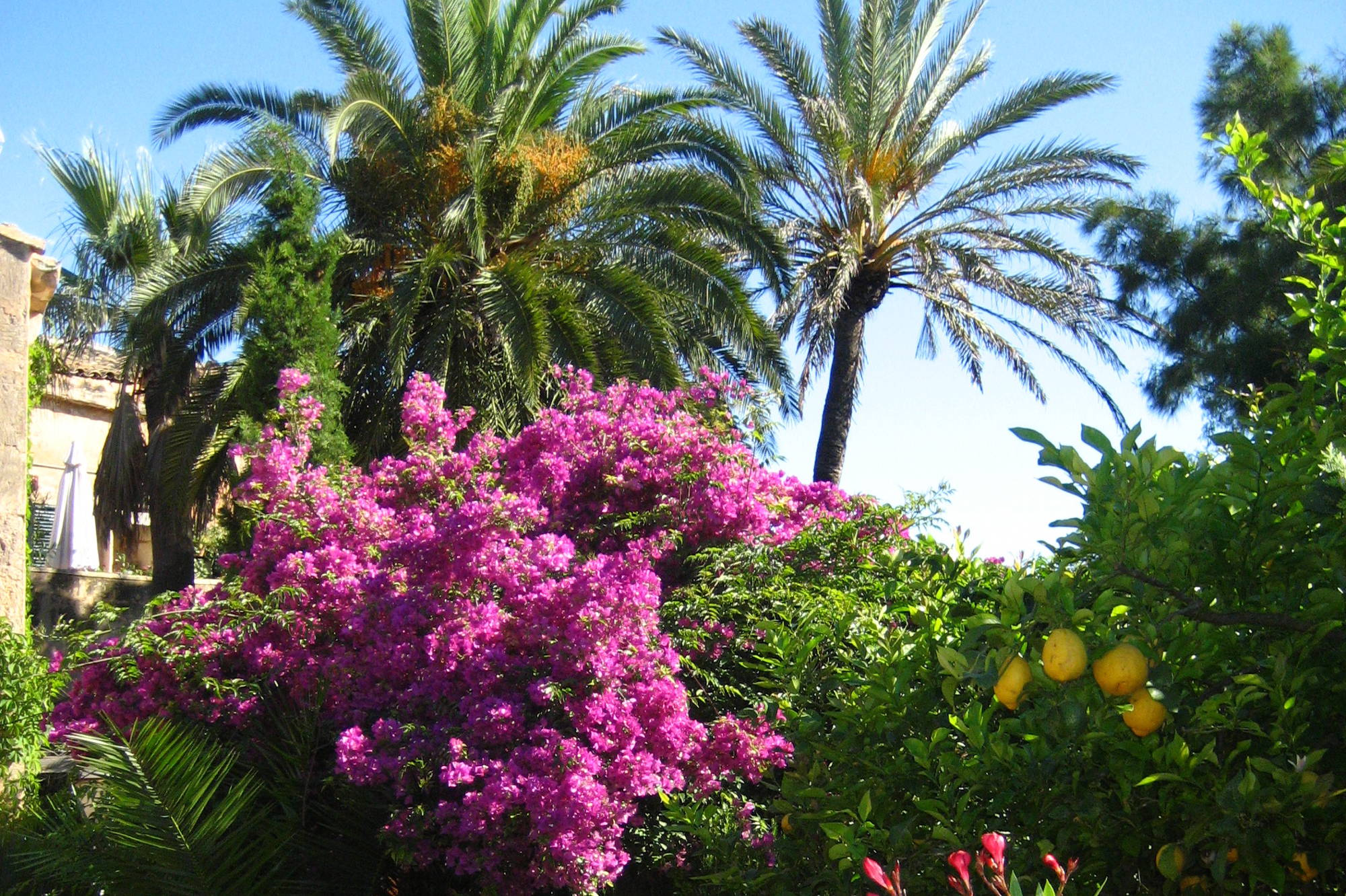 Finca Raims - Der Garten