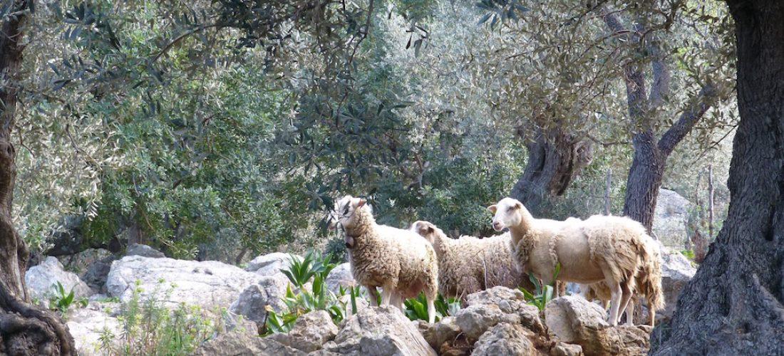 Gourmet-Wanderwoche Silvester auf Mallorca