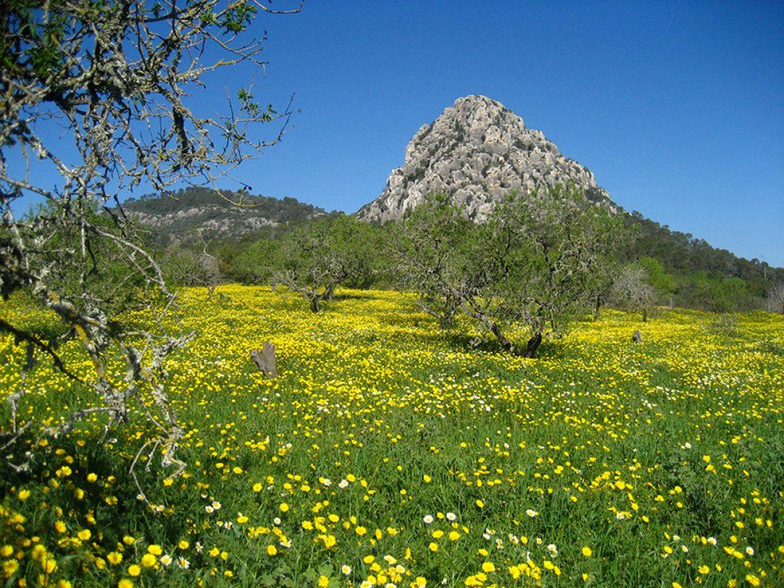 El Puig de ses bruixes cerca de Algaida