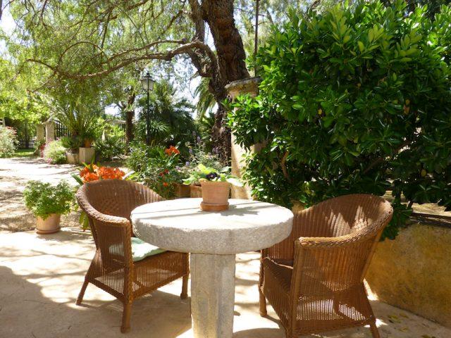 Moscatell - la terraza