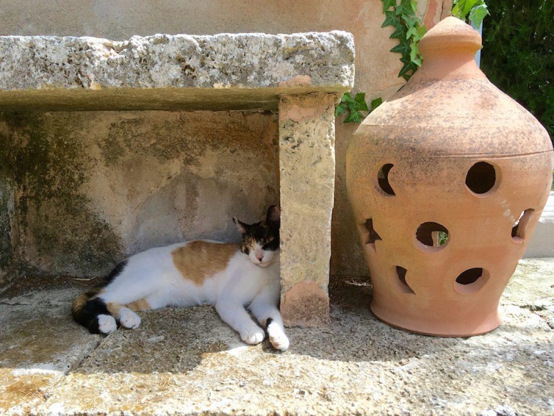Pia, una de las gatos de la Finca
